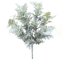 Dusty Miller Lacey camflor