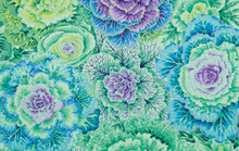 Brassica Green  1/2 Metre Length