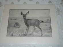 Mule and Fawn Pencil Sketch Print by Ernest Thompson Seton, 1885, Limited Print