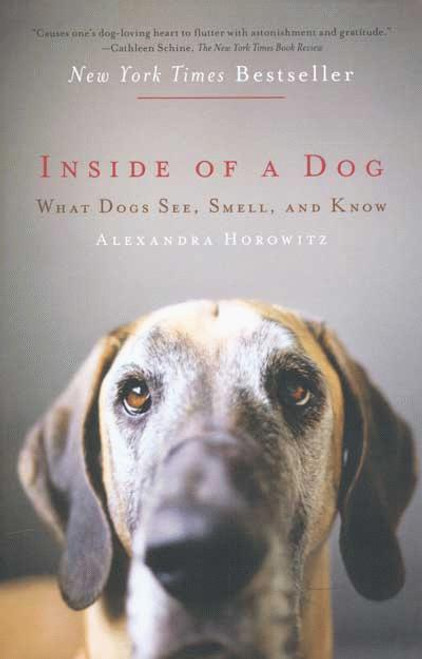 Inside Of A Dog - What Dogs See, Smell and Know