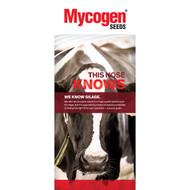Mycogen Seeds - Dairy - Blade 36