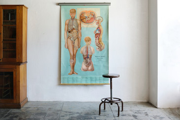 SOLD - Vintage Anatomy Chart, Topology of Organs,1965
