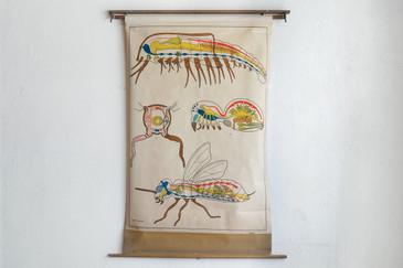 SOLD - Arthropod Pull Down Diagram, 1960s German