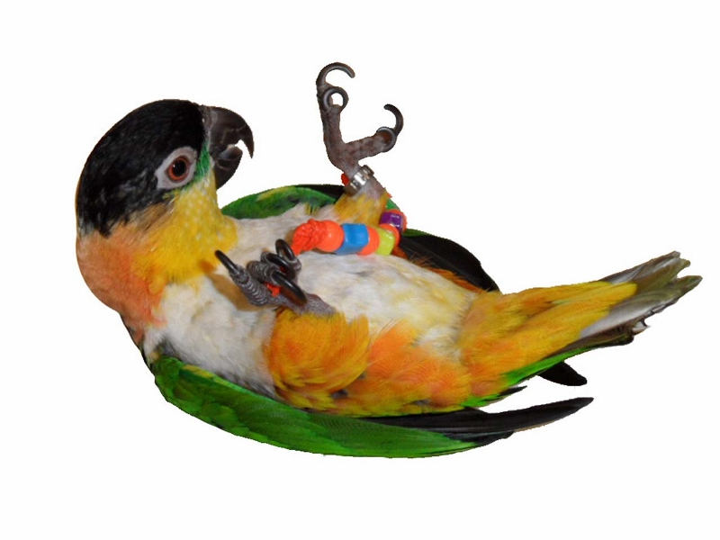 Parrot Foot Toys 32