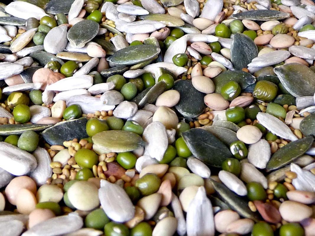 Original Organic Sprout Mix