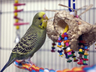Budgie with the Coco Clusters