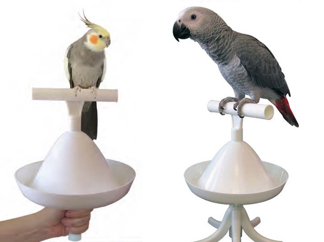 The Percher - one with a cockatiel and the other with an african grey