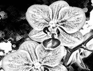 P021 Orchids - Palettini