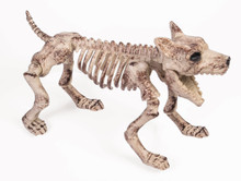 /bone-skeleton-dog-18-in-by-8-in/
