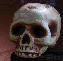 "Skull Acrylic Prop 8"" No Jaw Bone"