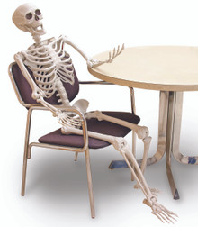 """Skeleton Prop 60"""" Posable and Realistic"""