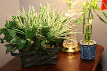 Plant Hidden Camera w/ Wifi Remote View (90-Day Standby Battery)
