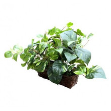 Fake Plant Hidden Camera w/ WiFi Remote View & 20 Hour Battery