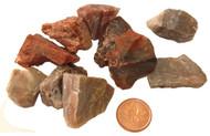 Raw Petrified Wood Stones - Small