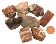 Petrified Wood Raw Stones - XXL