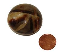 Tumbled Septarian - Specimen F - Image 1