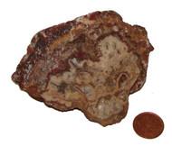 Raw Crazy Lace Agate  Stone - specimen G