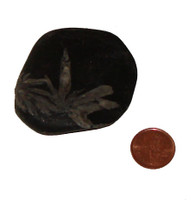Flower Stone - Specimen K