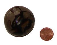 Septarian Stones - Specimen G