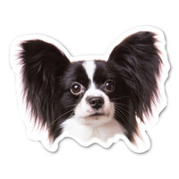 (Black) Papillon Magnet