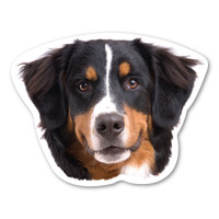 Bernese Mountain Dog Magnet
