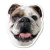 Are you a dog-lover? Do you have a bulldog?