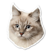 Siberian Cat Magnet