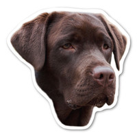 (Chocolate) Labrador Retriever  Magnet