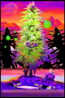 Weed Gnomes College Blacklight Poster 24x36