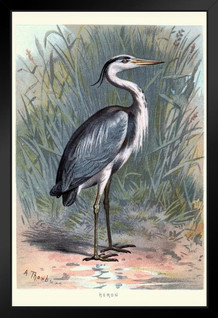 Grey Heron Vintage Art Print Framed Poster by ProFrames 14x20 inch