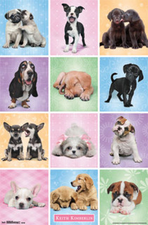 Puppies Cuties Keith Kimberlin Dogs Photo Poster 22x34
