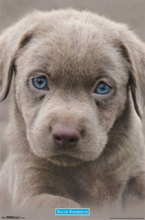 Puppy Blue Eyes Keith Kimberlin Cute Photo Art Print Poster 22x34