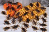 Roaches In A Bag  80/bag