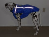 Custom jacket made for a Dalmatian in Blue