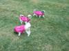 Siblings in Raspberry Pink