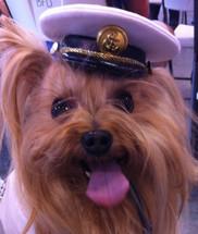 Captain's Dog Hat
