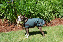 Hunter Green Sherpa Lined dog jacket shown on our model, Sparty