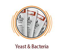 Yeast & Bacteria