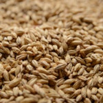 2-row Malt - Organically Grown