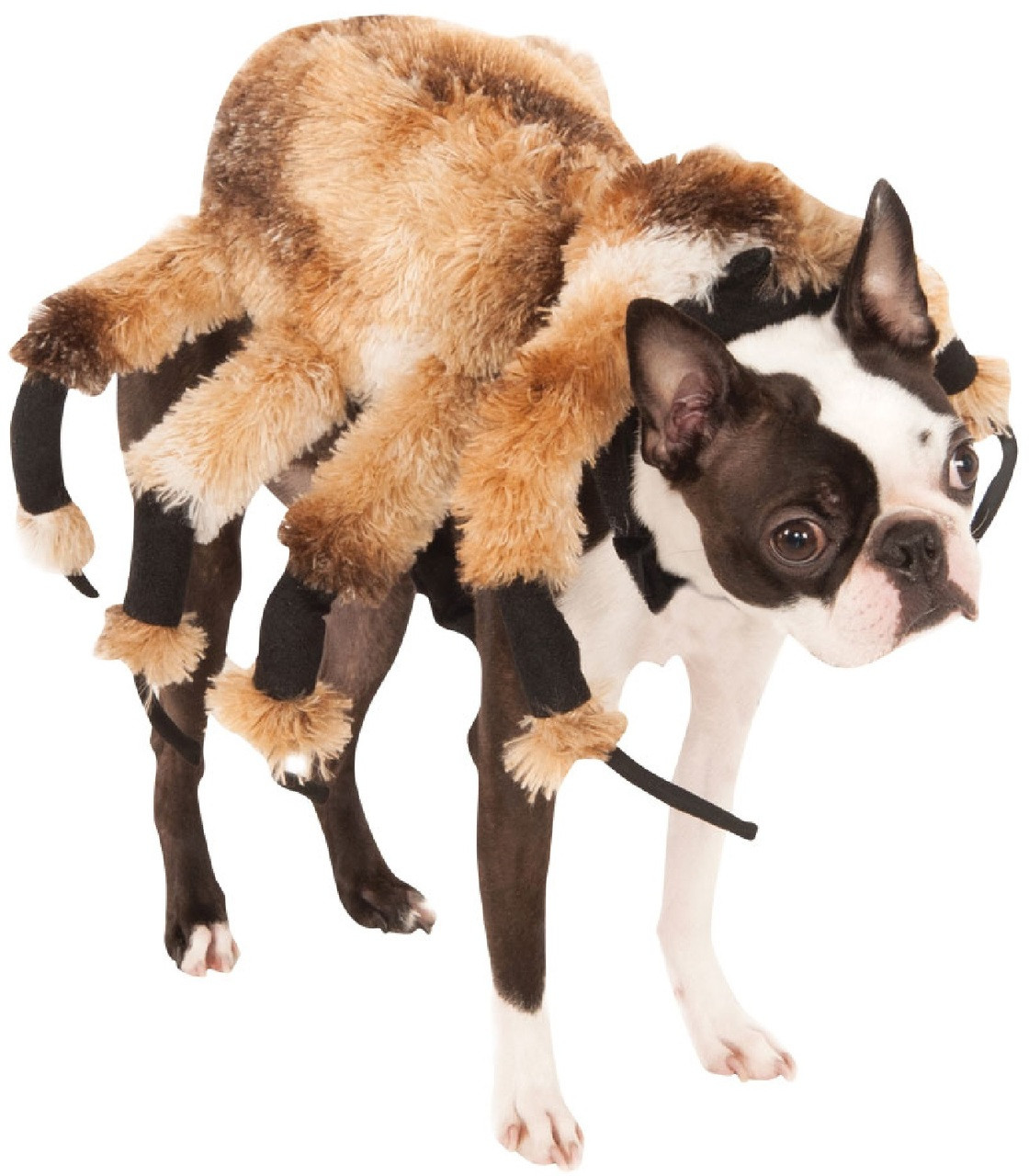 Dog Giant Spider Fancy Dress Costume. Image 1  sc 1 st  Fancy Me Limited : dog in a spider costume  - Germanpascual.Com