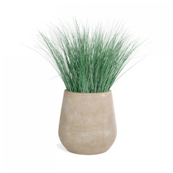 Bear Grass in Urbano Bell Fiber Clay Planter - SMALL