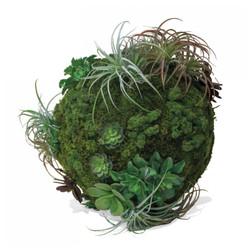 California Mix Moss Sphere