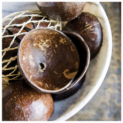 Coconut Shells - Natural - Set of 2