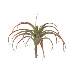 "Tillandsia LG 12""D Bronze - Set of 6"