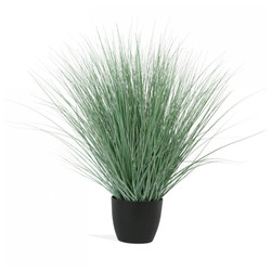 "Potted Bear Grass 45""H"