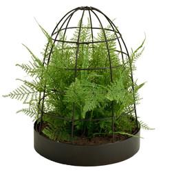 Asparagus Fern image 1