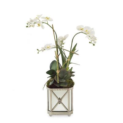 John Richard Silver Orchids