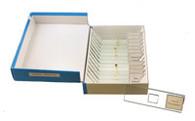 Insect Slide Set