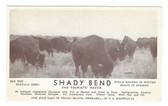 Grand Island, Nebraska Postcard:  Shady Bend Tourist Haven & Buffalo Herd