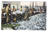 Gloucester, Massachusetts Postcard:  Splitting Fresh Fish at the Port
